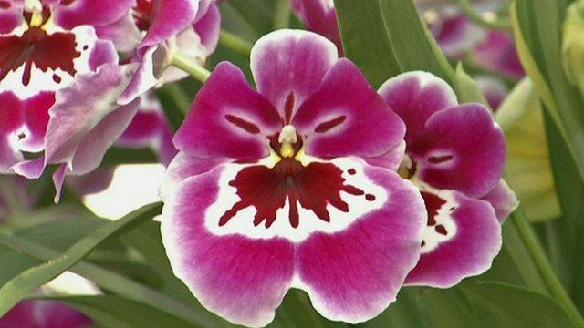 An orchid at New York Botanical Garden