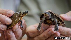 Seized turtles