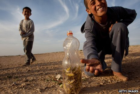 Bedouin children with a collection of locusts in a plastic bottle in a village in Israel, just over the border with Egypt