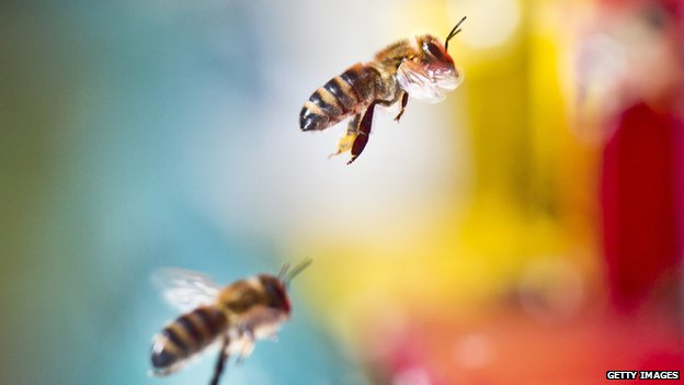 Ban pesticides linked to bee deaths, say MPs