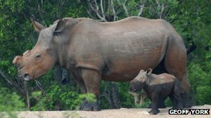 Rhino horn DNA database introduced