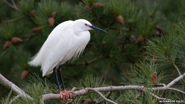 UK nature reserves attract new bird species