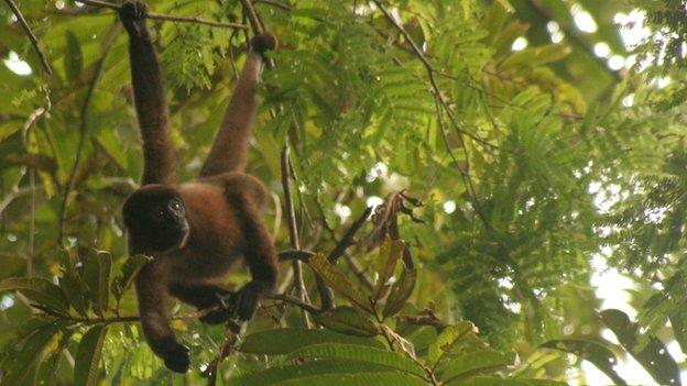 Monkeys can identify human hunters