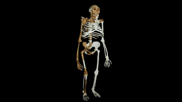 A computer generated image of what the reconstructed skeleton looks like