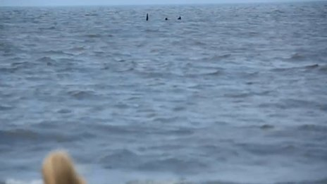 Footage of the Skegness Monster