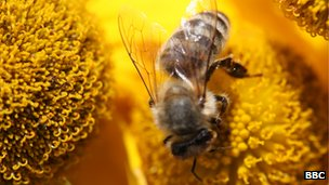 Europe bans pesticides linked to bee collapse