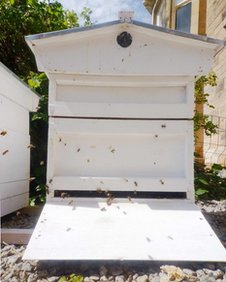 Ed O'Brien has three hives in his garden
