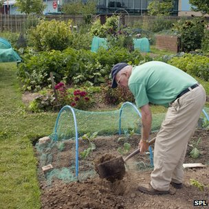 Man working in an allotment
