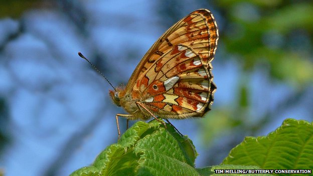 UK's rare spring butterflies make a late show