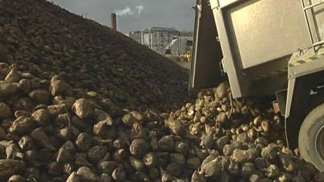 Unloading beet