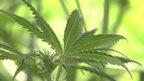 post-image-'Marijuana brand' plan of ex-corporate executive
