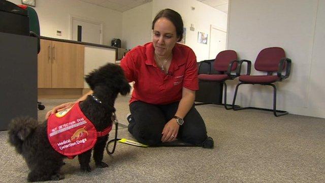 Yasmine Tornbald and her dog Nano