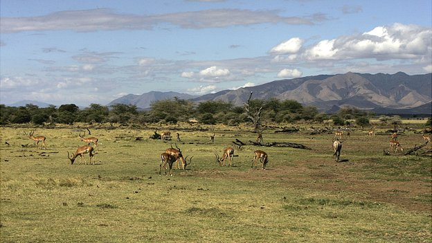 Antelopes on the plain