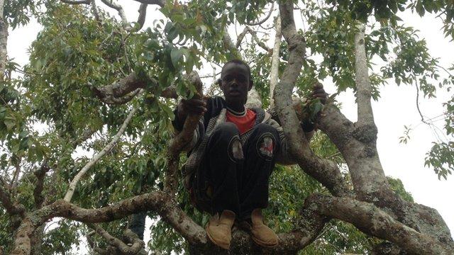 A khat picker in Meru, Kenya