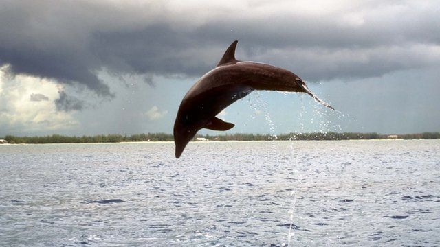 Dolphins respond to their 'names'