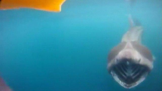 Shark on camera