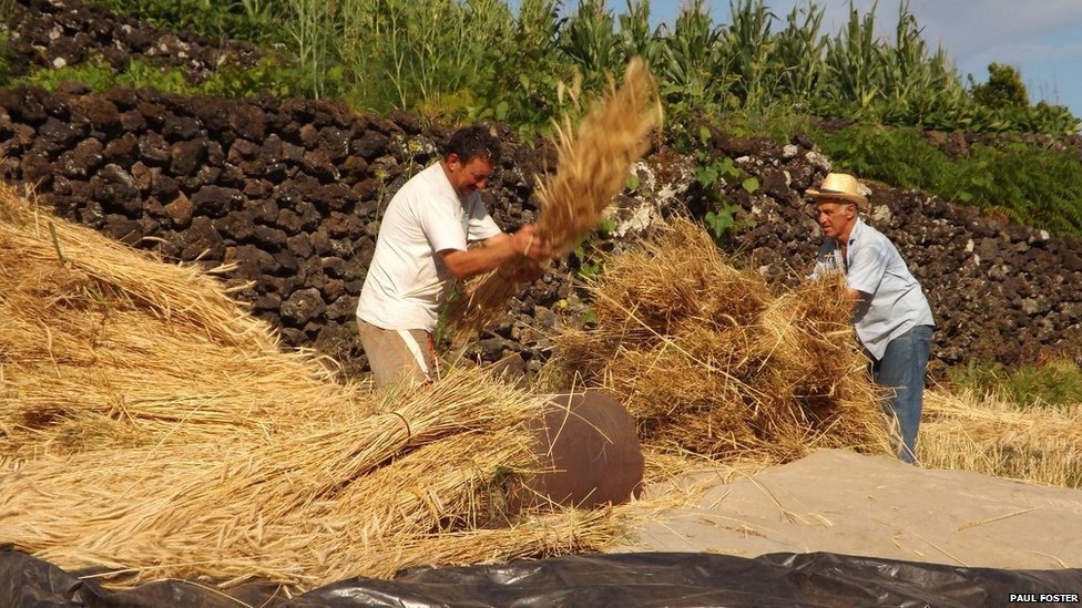 Harvesting by hand