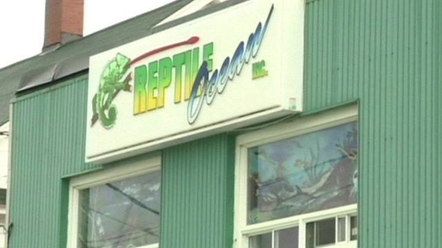Reptile shop