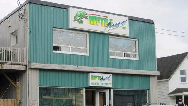 The Reptile Ocean shop