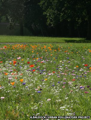Flower meadow, Bristol (Image courtesy of Katherine Baldock/University of Bristol/Urban Pollinators Project)