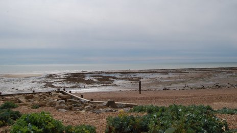 Part of the sunken forest at low tide