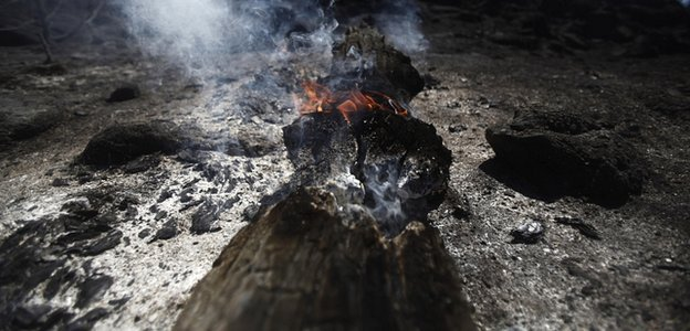 Burning tree, destroyed by a wildfire in Spain (Image: AP)