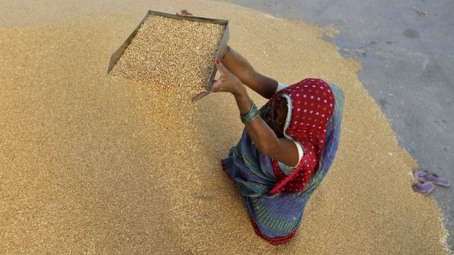A woman winnows wheat crop at a wholesale grain market near the Indian city of Ahmedabad on May 7, 2013