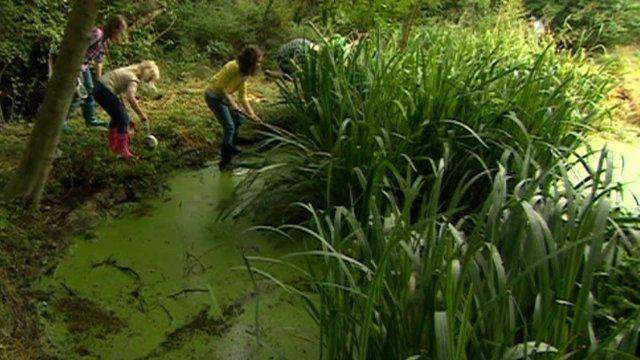 Children at a pond