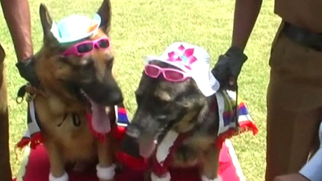 """Wedding"" of police dogs in Sri Lanka"