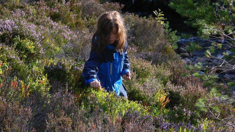 Girl picking blaeberries