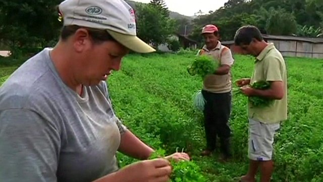Brazilian agricultural workers