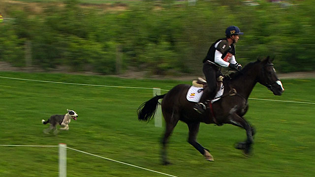 Dog chases horse at equestrian event