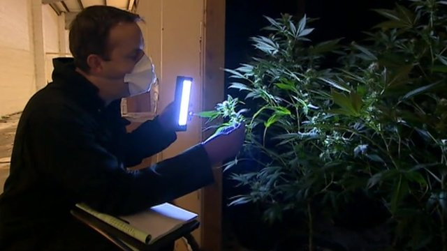 Raid at cannabis factory