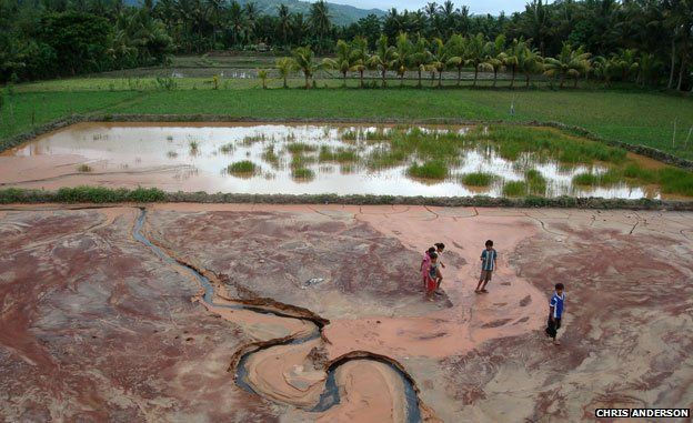 Children play on the cyanide- and mercury-contaminated tailings, adjacent to working rice paddies on the Indonesian island of Lombok