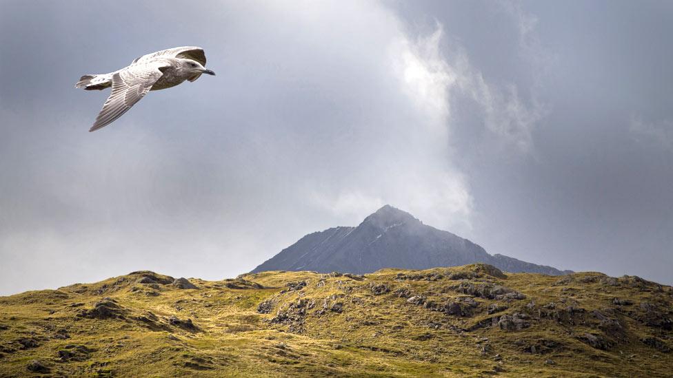 Snowdon and a bird
