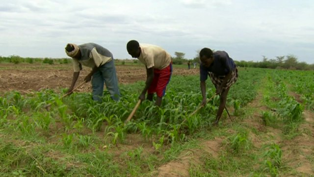 Farmers working on dry land