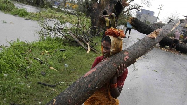 An Indian woman carries away a branch of an uprooted tree from Cyclone Phailin