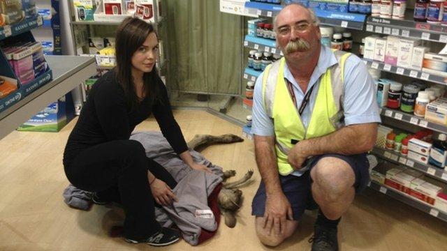 Wildlife Victoria volunteer Ella Rountree (L) and Geoffrey Fuller pose with a rescued kangaroo named Cyrus