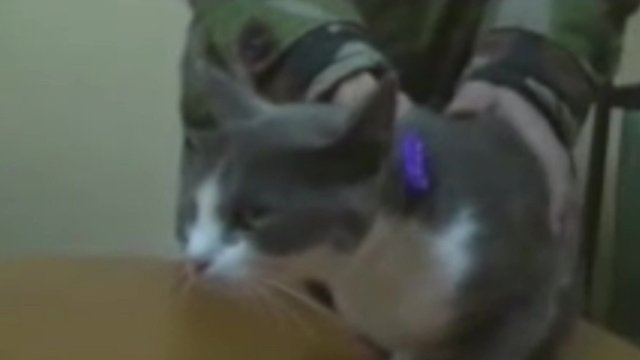Moldova cannabis-smuggling cat