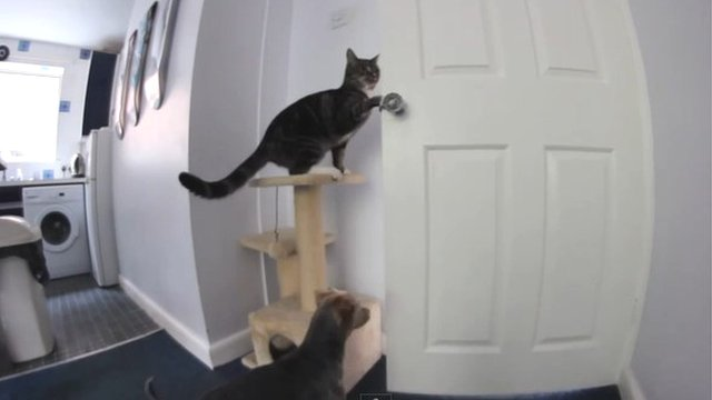 Dexter the cat opens a door for his canine friend