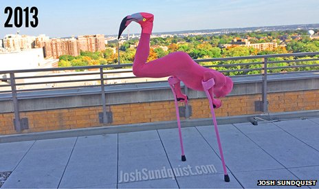 Josh Sundquist dressed as a flamingo