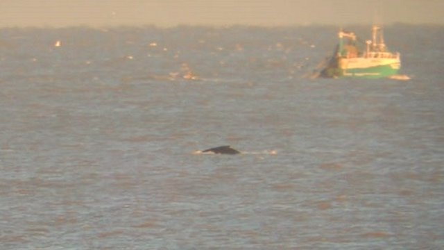 Humpback whale spotted off Minsmere