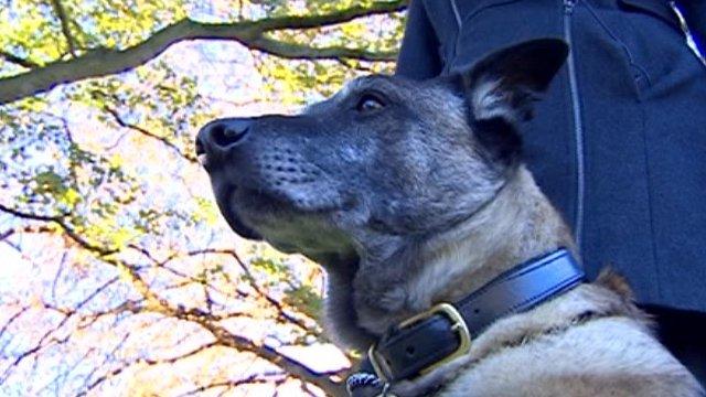 Bak, retired army dog