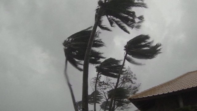 Palm trees caught in Typhoon Haiyan