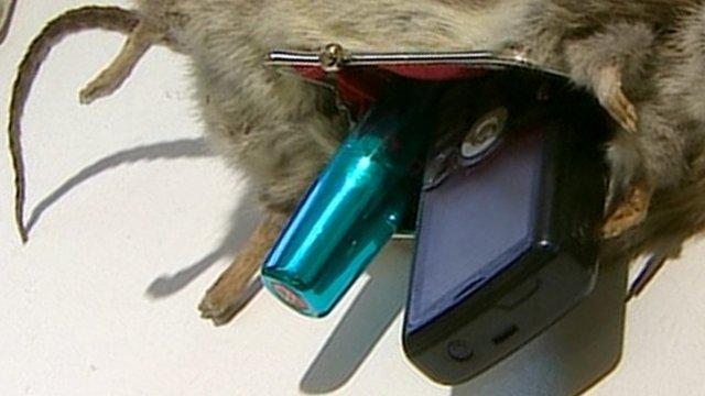 Rat Bag exhibit