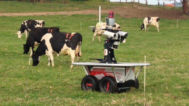 The robot herding cows