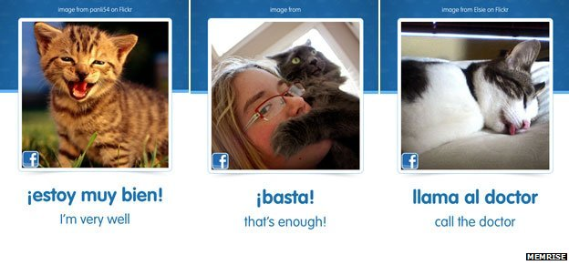 Composite image of cats and Spanish phrases