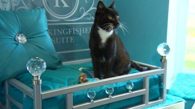 Cat in hotel bed