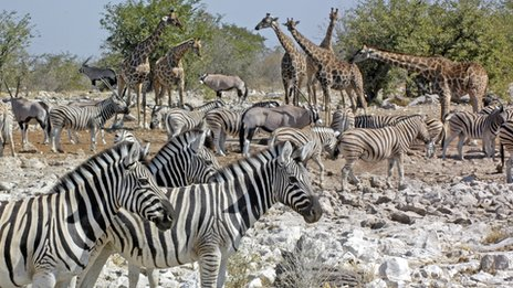 A watering hole in Africa
