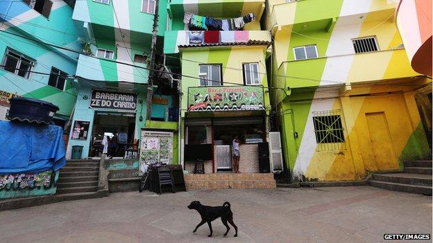 A dog walks in the Santa Marta shanty town on October 11, 2013 in Rio de Janeiro, Brazil.